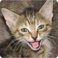 Adopt A Pet :: Ziva - Richfield, OH