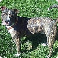 Adopt A Pet :: Bennett - Rochester, NY