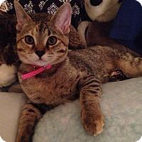 Adopt A Pet :: Mina - Chicago, IL