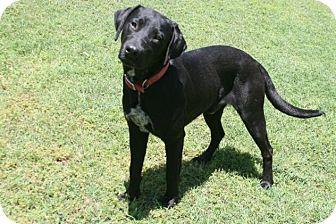 Labrador Retriever Mix Dog for adoption in Lufkin, Texas - Jamison