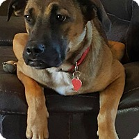Adopt A Pet :: Gabby - Portland, ME