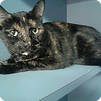 Adopt A Pet :: Sweetie - Lake Charles, LA