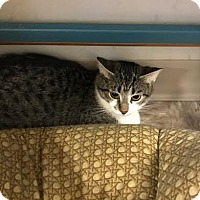 Adopt A Pet :: Triton - Byron Center, MI