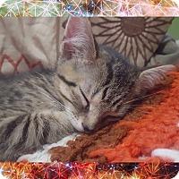 Adopt A Pet :: Tigger - Chesapeake Beach, MD