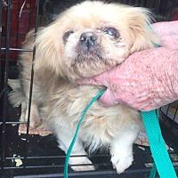 Adopt A Pet :: Luella - Loudonville, NY
