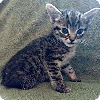 Adopt A Pet :: Jazz - Jefferson, NC