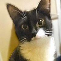 Adopt A Pet :: Cutie Girl - Warren, MI