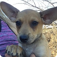 Adopt A Pet :: Rufus - Vacaville, CA