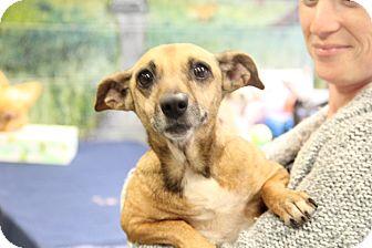 Terrier (Unknown Type, Small) Mix Dog for adoption in Greensboro, North Carolina - Cheerio