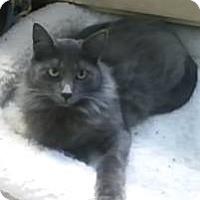 Adopt A Pet :: Beca - Napa, CA