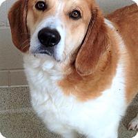 Adopt A Pet :: CTS Shorewood Ralph - Channahon, IL