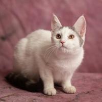 Adopt A Pet :: Peach - Harrisonburg, VA