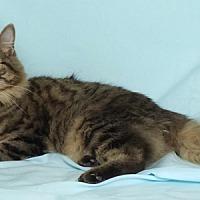 Adopt A Pet :: Shaggy - Kerrville, TX