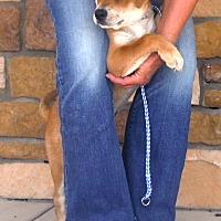 Adopt A Pet :: Sabrina - Artesia, NM