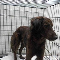 Adopt A Pet :: BEAU - Gainesville, FL