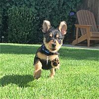 Adopt A Pet :: Rascal - Oakley, CA