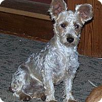 Adopt A Pet :: Lady - Denver, IN