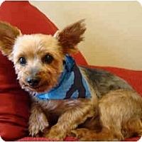 Adopt A Pet :: Scooby - Ocala, FL