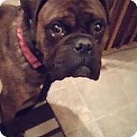Adopt A Pet :: Scotty - Saskatoon, SK