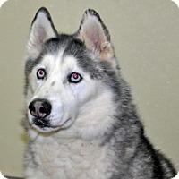 Adopt A Pet :: Thunder - Port Washington, NY