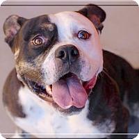 Adopt A Pet :: Bruno URGENT - Sacramento, CA