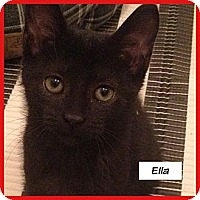 Adopt A Pet :: Ella - Miami, FL