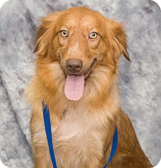 Golden Retriever Mix Dog for adoption in BIRMINGHAM, Alabama - Grace