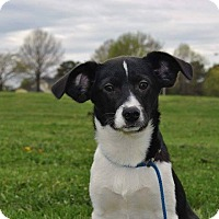 Adopt A Pet :: Pistachio - Hamburg, PA