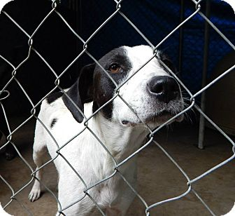 Labrador Retriever Mix Dog for adoption in Henderson, North Carolina - Jen