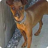 Adopt A Pet :: Claire - Oceanside, CA