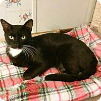 Adopt A Pet :: Frankenstein - St. Louis, MO