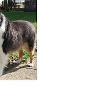 Adopt A Pet :: Remington - COLUMBUS, OH