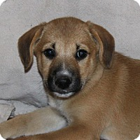 Adopt A Pet :: Minnie - PENDING - in Maine - kennebunkport, ME