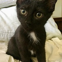 Adopt A Pet :: Hunter - Los Angeles, CA