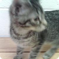 Adopt A Pet :: Castor Oyl - New Bern, NC