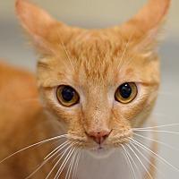 Adopt A Pet :: 10311262 GRASSHOPPER - Brooksville, FL
