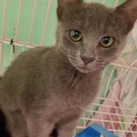 Adopt A Pet :: Frances - Gainesville, FL
