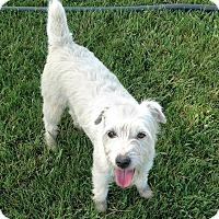 Adopt A Pet :: Gabbie in Lawton, OK - Austin, TX