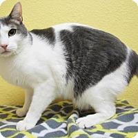 Adopt A Pet :: Simba - Benbrook, TX