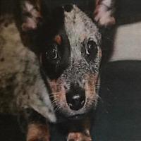 Adopt A Pet :: WALDO - Modesto, CA
