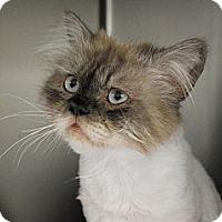 Adopt A Pet :: Tommy - Lunenburg, MA