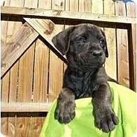 Adopt A Pet :: Suzy Q - Thomasville, GA