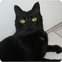 Adopt A Pet :: Lucky-declawed - Arlington, VA