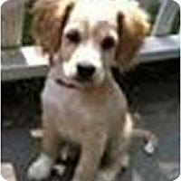 Adopt A Pet :: TINY & PIPER - Toluca Lake, CA
