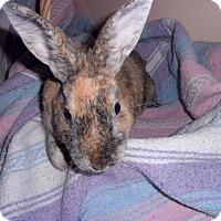 Adopt A Pet :: Dustilyn - Maple Shade, NJ