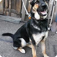 Adopt A Pet :: Kaylee - Evergreen Park, IL