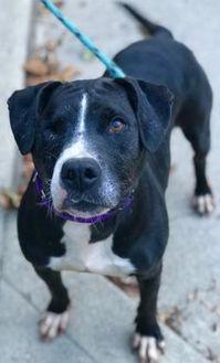 Mixed Breed (Medium) Mix Dog for adoption in Charleston, West Virginia - Jillian