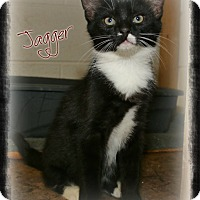 Adopt A Pet :: Jagger - Shippenville, PA