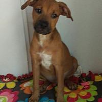 Adopt A Pet :: Muffin - Apache Junction, AZ