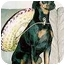 Photo 2 - Miniature Pinscher Dog for adoption in Florissant, Missouri - Diesel